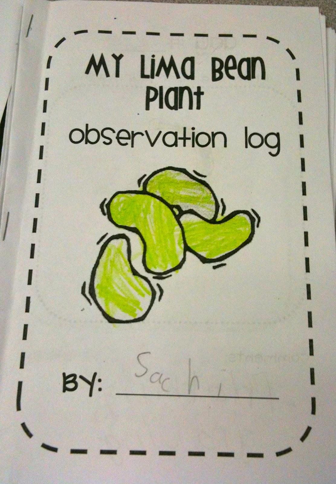 Kindergarten SuperKids: More Plants!