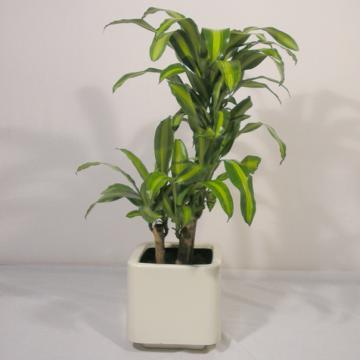 Zen y feng shui tao feng shui plantas for Flores para interiores con poca luz