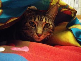 Mario hiding in a Blanket Fort