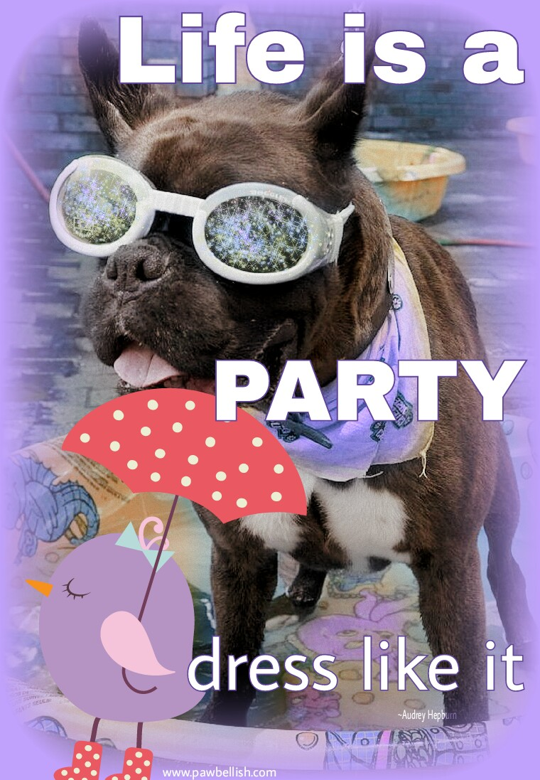 Dog enjoying a pool party| Life's a party, dress like it ~Audrey Hepburn