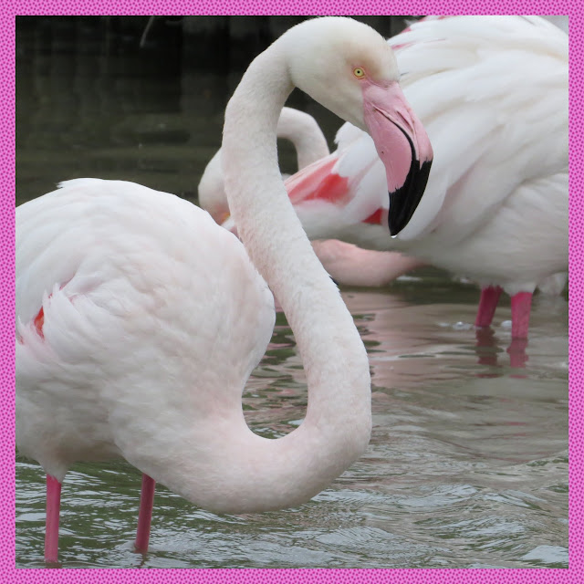 A Pink Flamingo in the Camargue, France