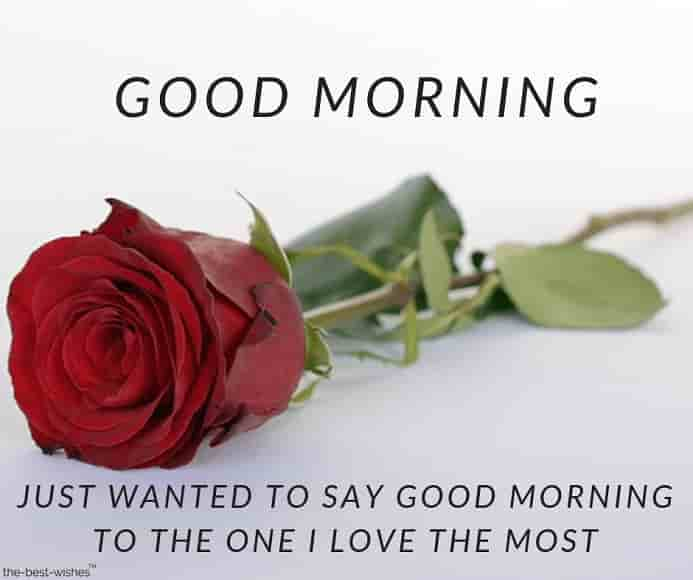 good morning message with red rose