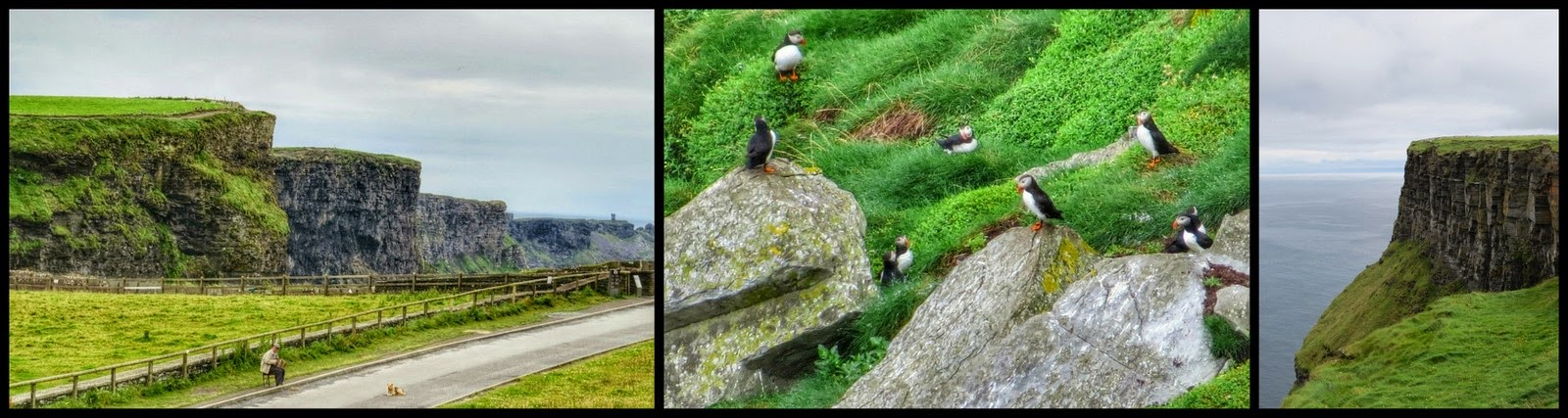 Cliffs of Moher and Puffins