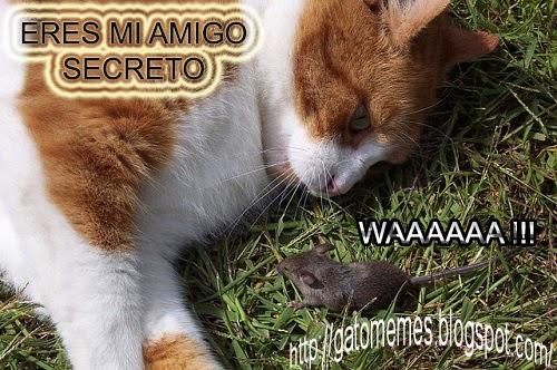 Imágenes De Gatos Lindos: El Gato Y El Ratón