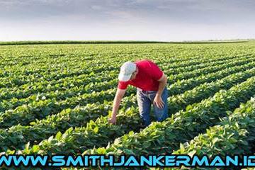 Lowongan Kerja Perusahaan Pertanian Di Pekanbaru Maret 2018