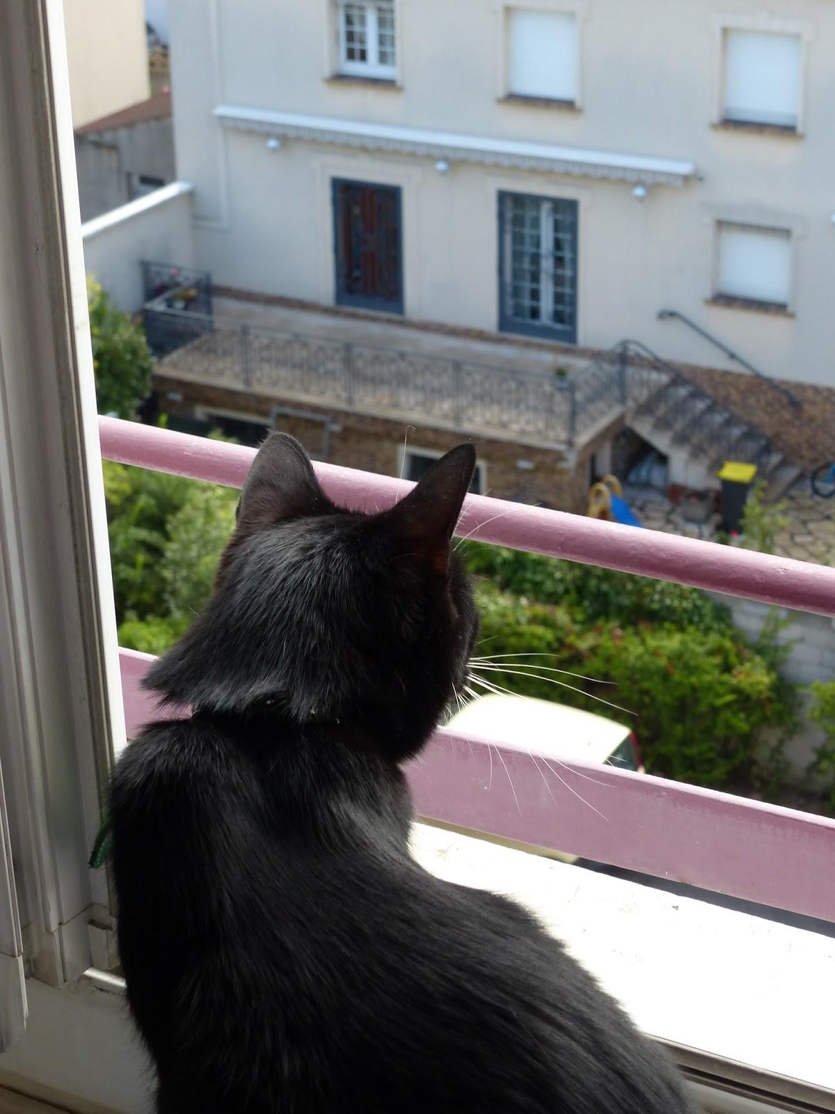 Épais noir ghetto chatte