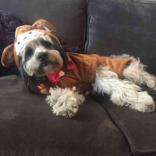 Janel Parrish's dog in Halloween monkey costume