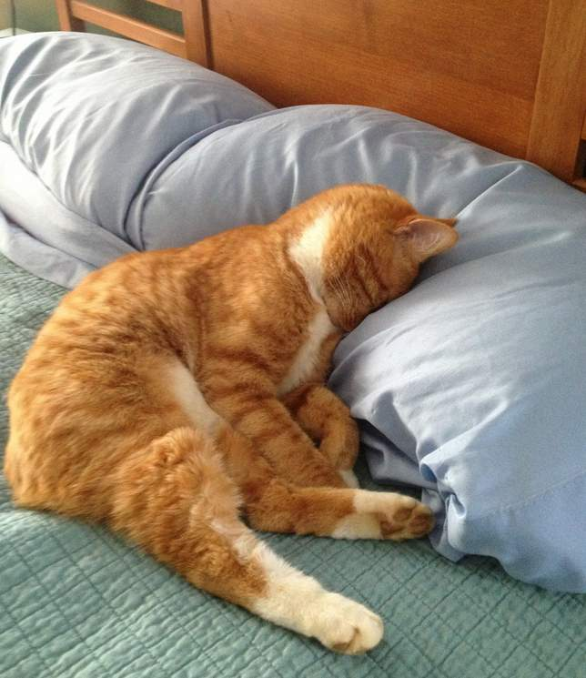 Funny cats - part 210, cute cat pics, cat and kitten photos, adorable cat picture