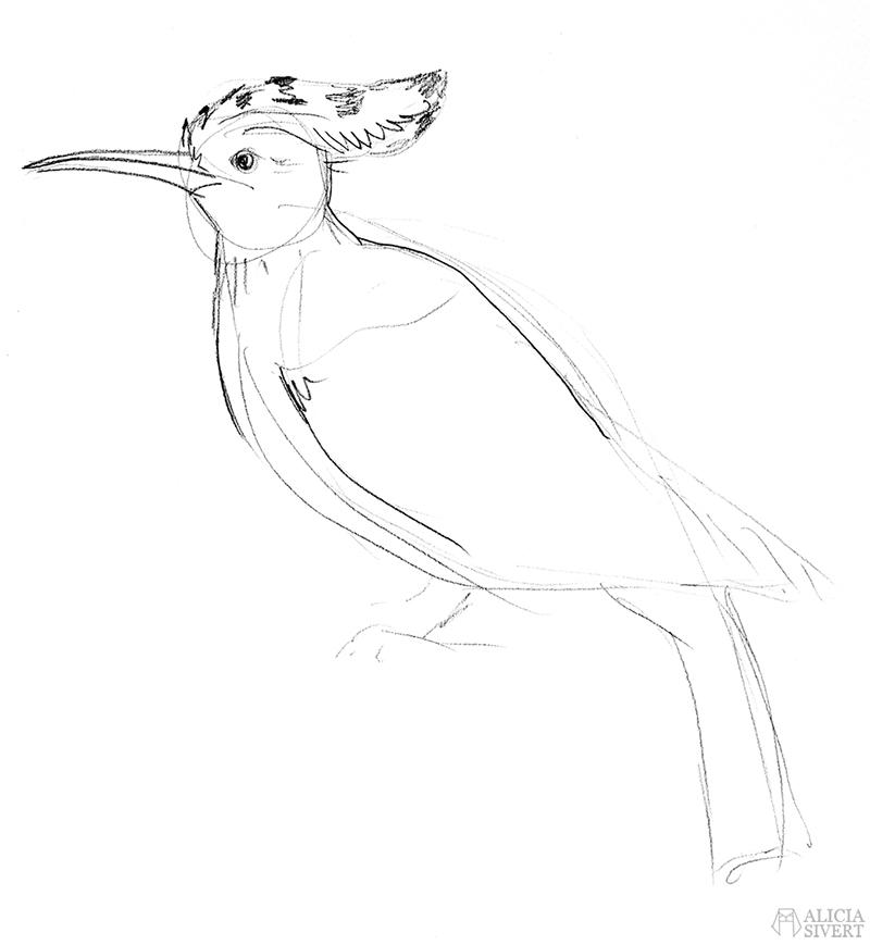Teckningsutmaningen i juni, foto av Alicia Sivertsson. aliciasivert teckning skiss teckningar  skiss skissateckna rita skapa skapande utmaning kreativitet skaparutmaning bloggutmaning månadsutmaning kreativ penna pennor blyertspennor blyertspenna härfågel