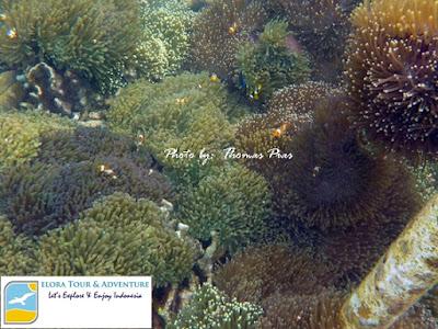 panorama bawah laut spot replanting terumbu karang