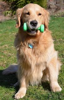 exercícios de força com cães