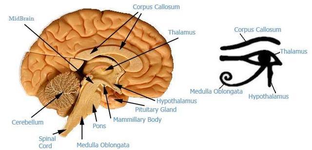 A Glândula Pineal e o Olho de Hórus - Imagem comparativa