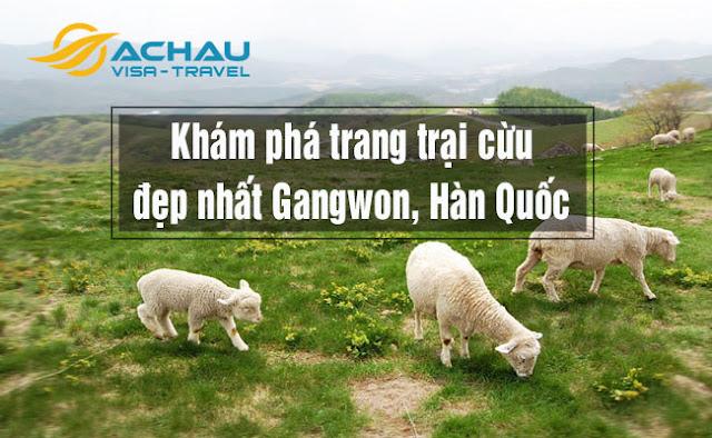 Khám phá trang trại cừu đẹp nhất Gangwon, Hàn Quốc
