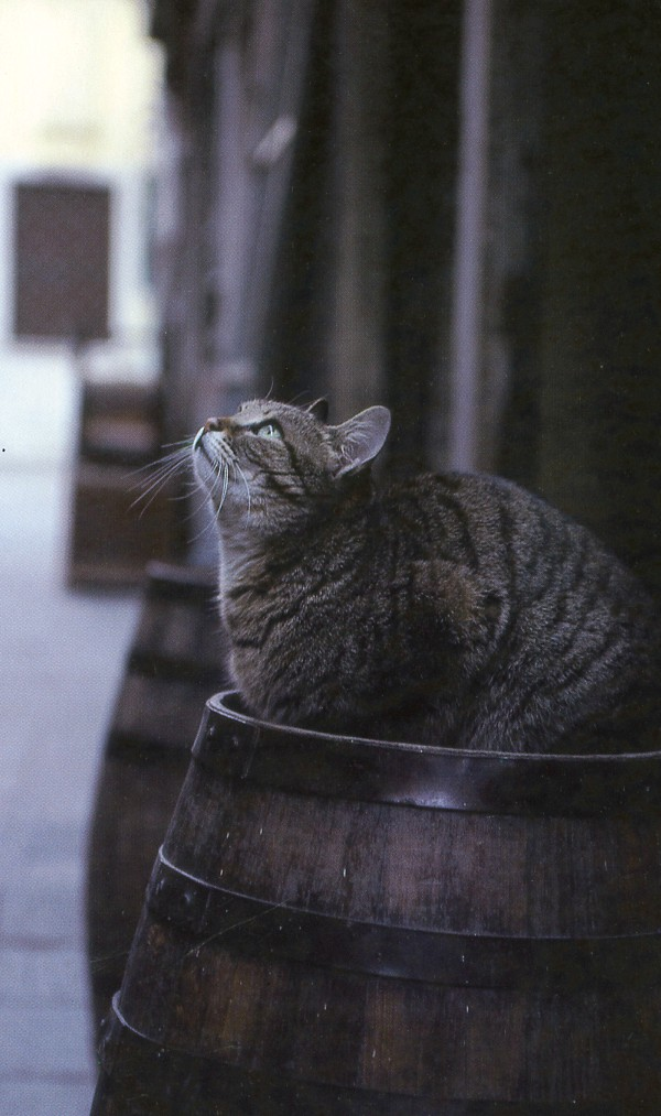 cat photographer italy