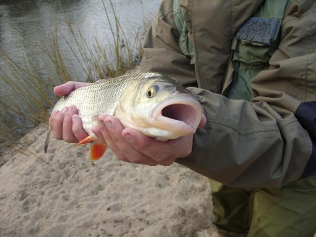 Рыбалка в Северодонецке.