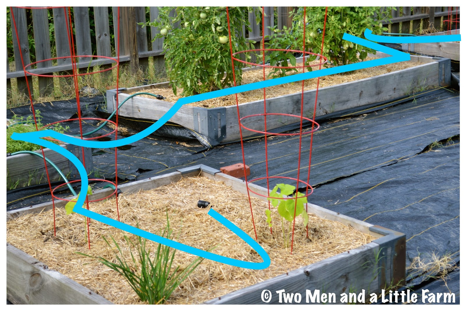 Two men and a little farm snip n drip raised bed garden for Laying out a garden plan