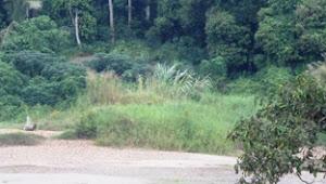 Dari Asal Nama Pulau Temiang Hingga Kisah Datuk Ngebi German Tanggo Jati dan Tari Kelik Elang