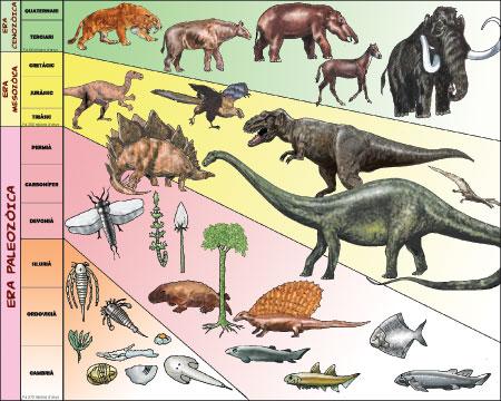 Blog De Los Ninos Dinosaurios Tipos De Dinosaurios Los dinosaurios ornitisquios fueron aquellos dinosaurios con cadera de ave. dinosaurios tipos de dinosaurios