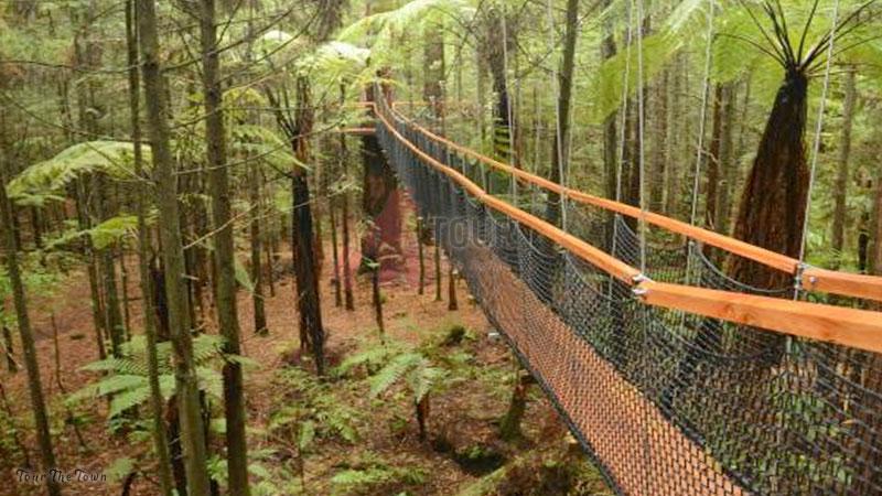 The Redwoods Rotorua Tourist New Zealand