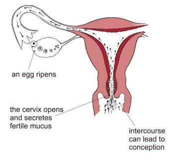 motilitas sperma progresive (PR)