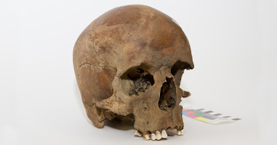 Caucasian man's skull dating to 1600s found in eastern Australia
