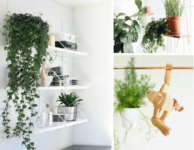 Best Hanging Plant Ideas For Interior Decoration
