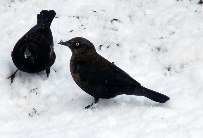 Connecticut Audubon Society: 10/01/2011