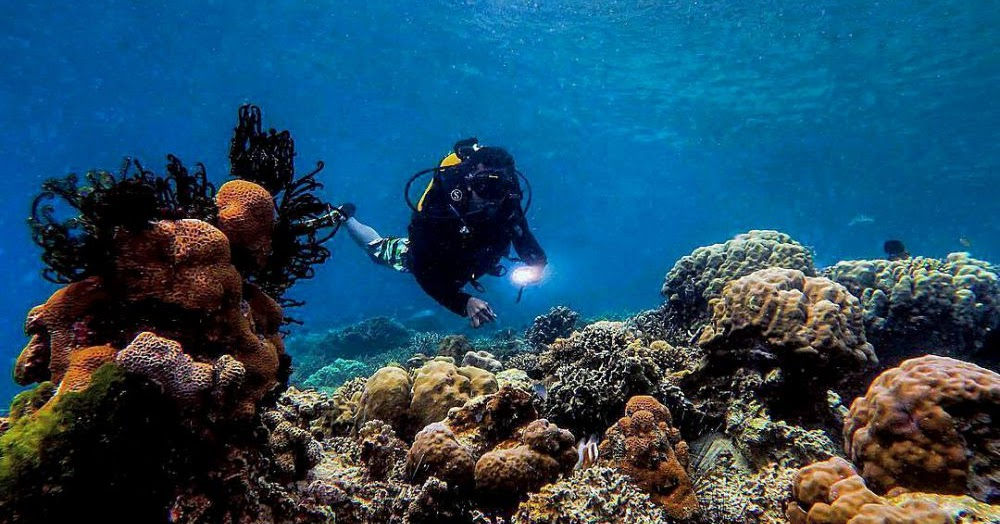 Menikmati Keindahan Terumbu Karang Di Pulau Kodingareng Keke Arsy Tours Travel Tour Operator Travel Agent Sulawesi Makassar