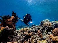Menikmati Keindahan Terumbu Karang di Pulau Kodingareng Keke