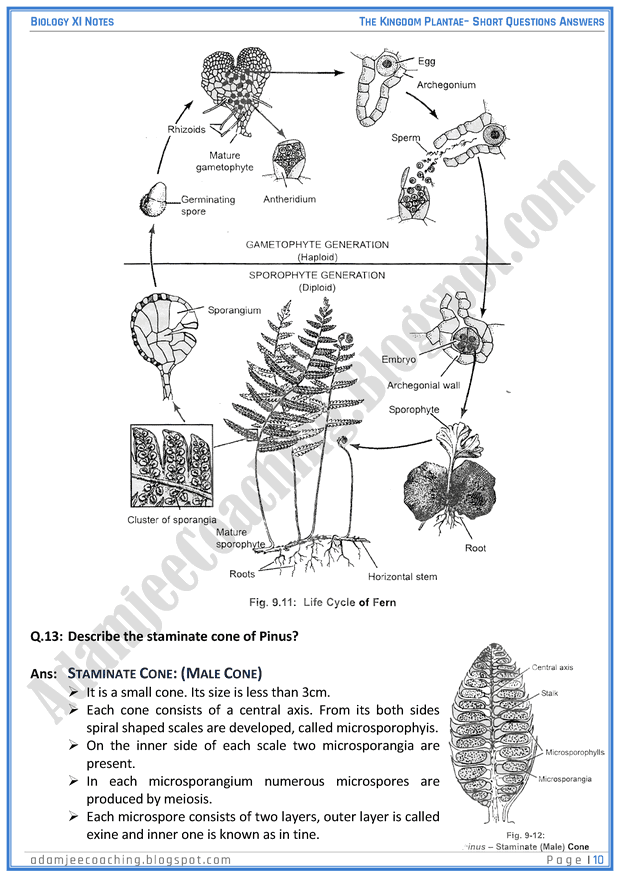 kingdom-plantae-short-question-answers-biology-11th