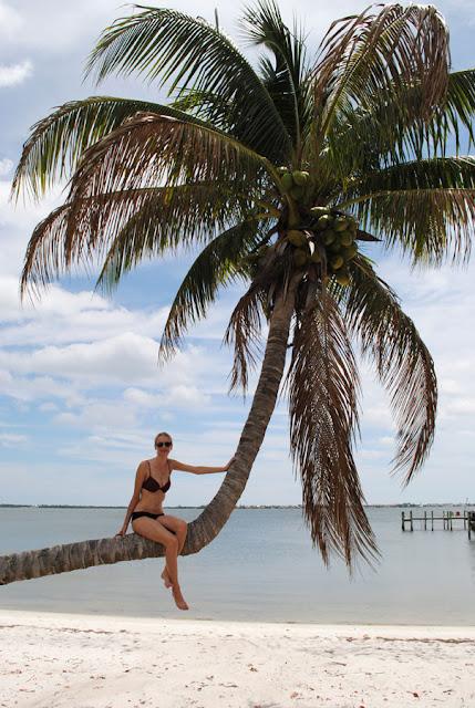 in palmbomen klimmen