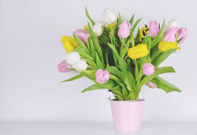 Pink yellow white tulips