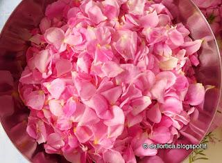 rose del giardino della fattoria didattica dell ortica a Savigno Valsamoggia Bologna vicino Zocca