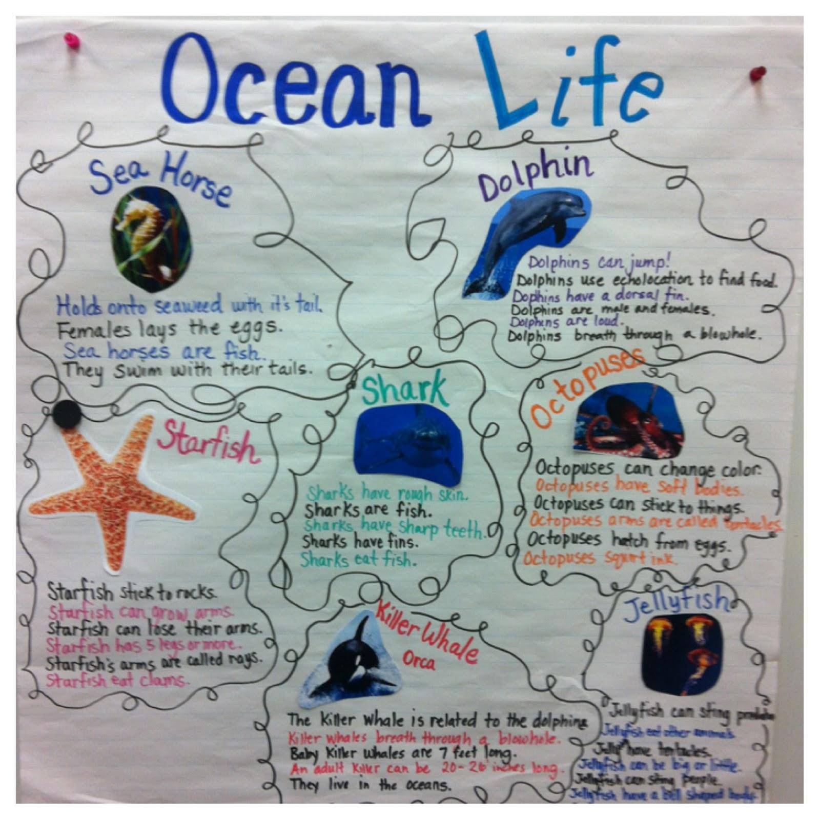 Little Miss Hood S Adventures In Kindergarten An Ocean