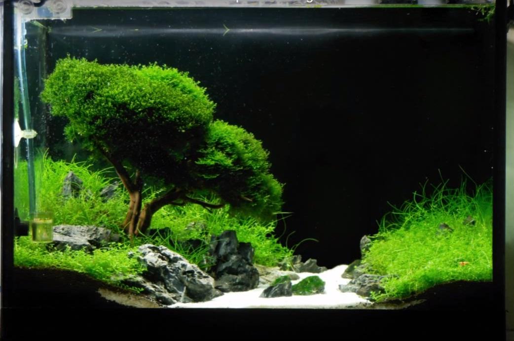 Contoh gambar aquascape dan jenis tanaman alam ikan - Gambar aquascape ...
