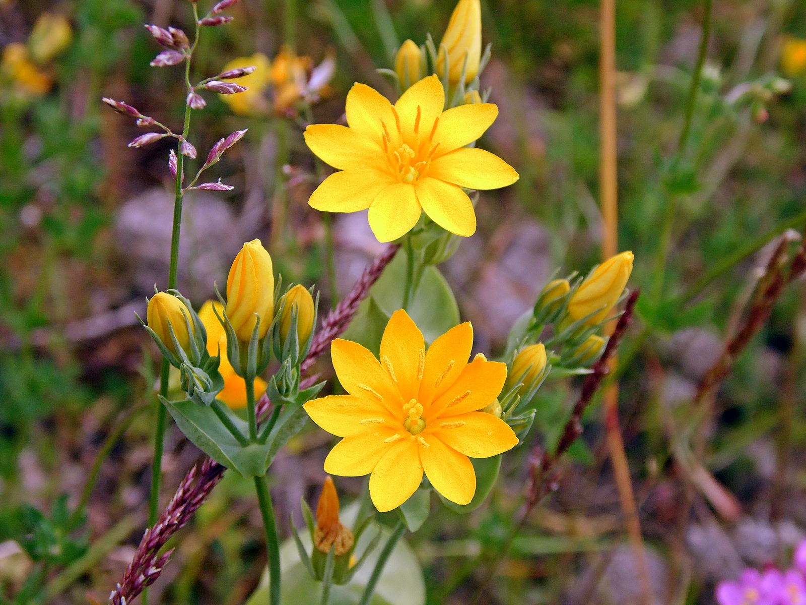 Random Jottings More Wild Flowers