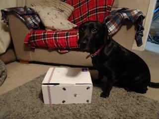 springador with open box