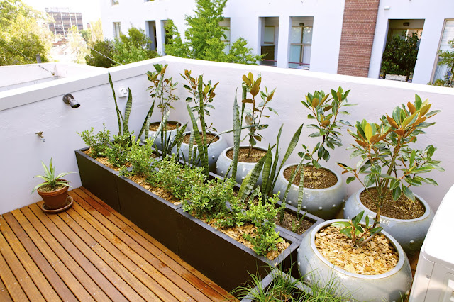 Example of Rooftop Garden Plants for Your Beautiful Rooftop
