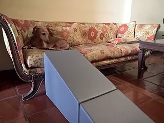 rampa para cães em sofás