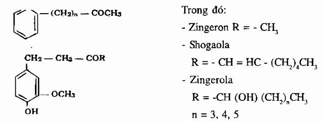 Thành phần hóa học Gừng - Zingiber offcinale - Nguyên liệu làm thuốc Chữa Bệnh Tiêu Hóa
