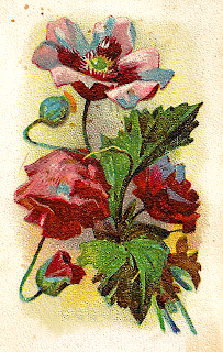 flower old illustration trade card antique botanical artwork