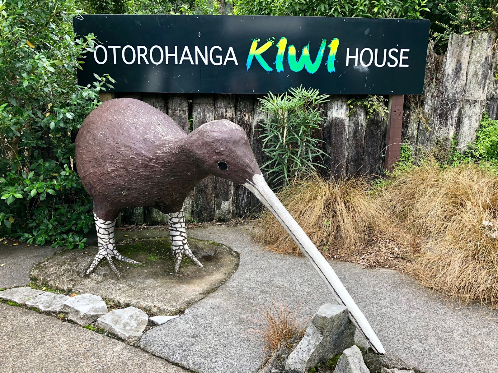 Kiwi House New Zealand Best Place To See Kiwis