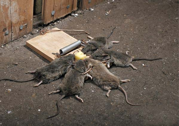 How to trap a mouse?