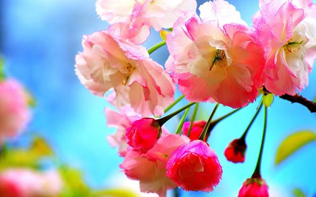 Baixe grátis papel de parede flores na primavera em hd 1080p.