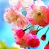 Papel de Parede Flores na Primavera
