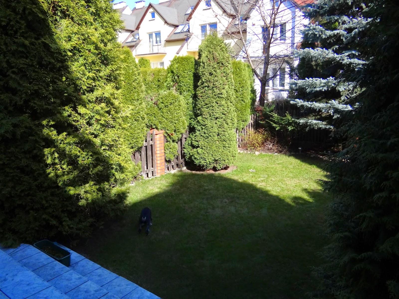 Modern Green Ogrody I Wnętrza Mały Ogródek Przydomowy Przy Ulicy