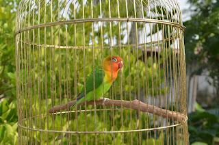 Burung Pak Lurah