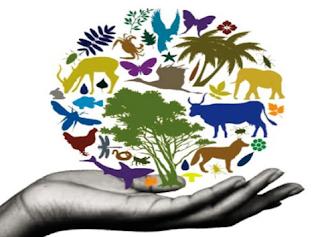 contoh soal dan pembahasan keanekaragaman hayati
