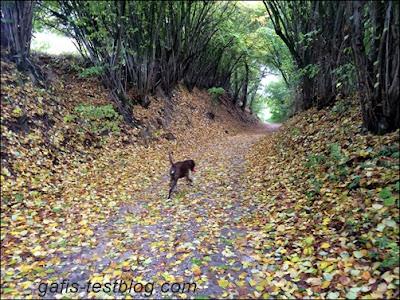 Boxer Amy im Blätterwald