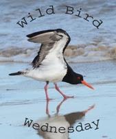 Wild Bird Wednesday Websites For Bird Lovers